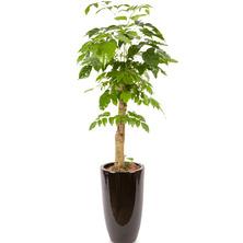 행복나무 HP(사랑을담아..)