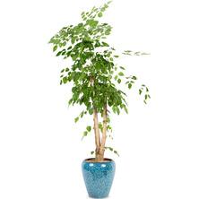 행복나무 YA