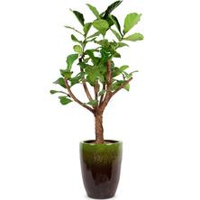 떡갈나무 BY