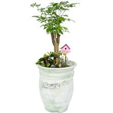 해피트리(행복나무^^)EG