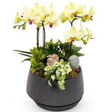포춘(예쁜식물^^)
