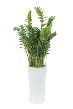 금전수FR 돈들어오는 식물!!