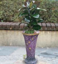 고무나무5788
