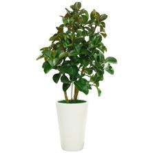 고무나무(산소가폴폴~)